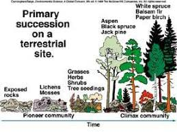 Primary Succession And Secondary Succession Venn Diagram Ecological Succession Loyabiology