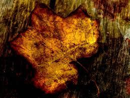 Fall Leaf Texture Backgrounds Presnetation Ppt Backgrounds Templates