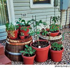 bucket gardening. Container Gardening Bucket
