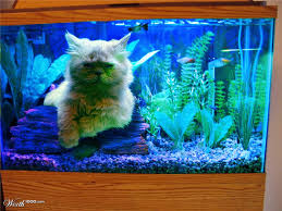 Fish Tank Cats In Fish Tanks Off Topic