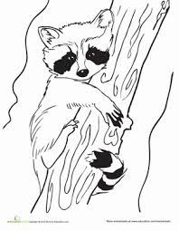Small Picture Baby Raccoon Worksheet Educationcom