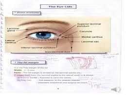 Eyelid Anatomy Eyelid Anatomy Authorstream