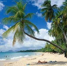 Karibik: Martinique - französischer als ...
