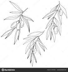 оливковое дерево в вектор стиле изолированные векторное
