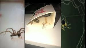 Woman Finds Nearly 50 Brown Recluse Spiders In Bedroom Abc7news Com