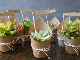 ... Succulent Wedding Favors Paper Wrapped Potted Succulent Plants Gifts  Small Plants Full Size