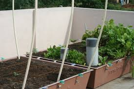 Kitchen Garden India Rooftop Farming Organic Garden Modules Lonely Leafs Green Blog