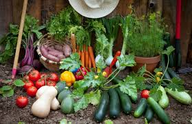 how to grow your own vegetables herbs