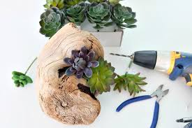 create a beautiful diy faux succulent driftwood planter with this easy step by step tutorial