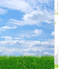 grass and sky backgrounds. Exellent And Green Grass Blue Sky Background And Grass Sky Backgrounds
