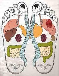 Risultati immagini per fegato visto dai cinesi