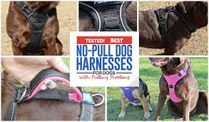 32 Best Dog Harnesses For Dogs That Pull In 2019