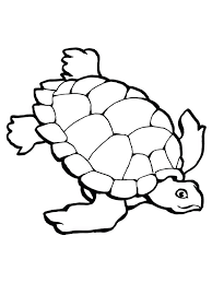 Sea Turtle Coloring Sheet Sea Turtle Research Free Coloring Page