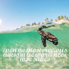 Turtle Quotes quotes 19