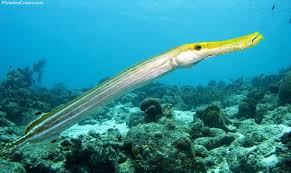 Some Of The Most Common Fish Youll See In Maui Waters