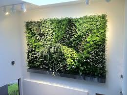 great office plants. great office plants 100 ideas on vouum t