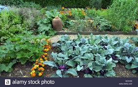Kitchen Garden Plants Raised Bed Plots Kitchen Garden With Companion Plants To Deter