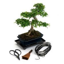 indoor bonsai gift sets