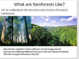 What Are Biomes Geography Biomes Layers Of The Tropical Rainforest