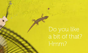 he had just dropped a home cooked lizardy nugget on my bare stomach and this mothering gecko was just frozen there on the ceiling staring intensely at