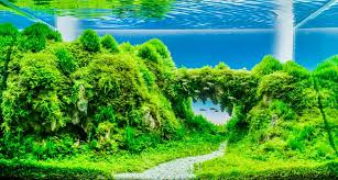 Best Low Light Carpet Plant Best Aquarium Carpet Plants 2019 Aquascape Guru