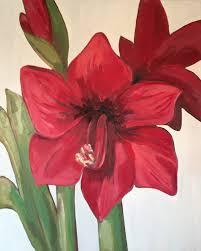 red amaryllis ii