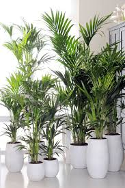 Decorative Indoor Trees 17 Best Ideas About Indoor Palm Trees On Pinterest Palm Tree