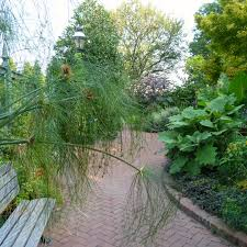like many of the gardens near the capitol mall the mary livingston ripley garden is long and narrow traversing a city block between buildings