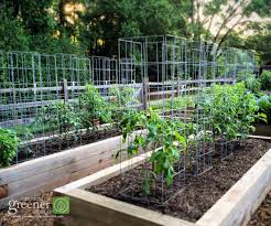 Diy tomato cage Wire Ultimate Tomato Cage Joegardenercom Growing Greener World Make The Ultimate Tomato Cage Growingagreenerworldcom