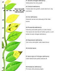 Aquarium Plant Nutrient Deficiency Chart Bedowntowndaytona Com