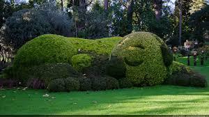 Sculpture végétal  - Page 2 Images?q=tbn:ANd9GcRyhX3ZdsNfeQ7C35GBuLuiqr8KaCAxRwatcCcho3ugBxjzevcHqQ