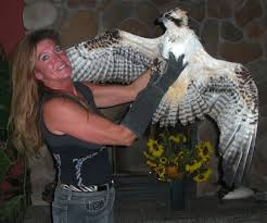 Ospreys to be featured during Festival at Sandpoint   The ...