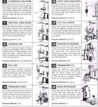 Home Gym Workout Chart Pdf Golds Gym Xrs 50 Weight Chart Golds Gym Xrs 50 Home Gym
