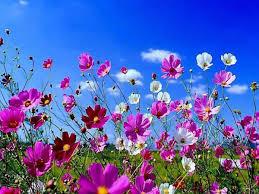 """Résultat de recherche d'images pour """"jolies fleurs"""""""