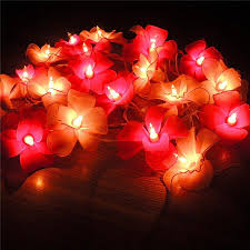 Fairy Lights Daraz Buy Home Fairy Lights At Best Prices Online In Pakistan