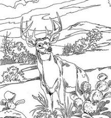 11 Best Coloring Pictures Of Animals Images Kid Drawings Coloring