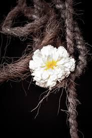 Kostenloses Foto Zum Thema Blume Abend Makro Nikon