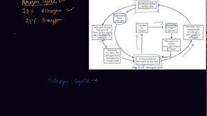 Nitrogen Cycle Class 8 Biology Microorganisms Friend And Foe