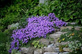 create a faux rock garden on a hillside or berm state by state gardening web articles