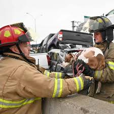Fire Department Saving Little Dog