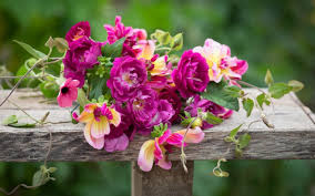 problem solving plants and clever breeding has changed sarah raven s mind about roses here are some of her favourites