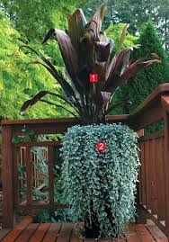 plants for shaded porch modern pot sleek combination shade tolerant porch plants plants for shaded porch