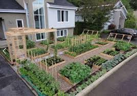 Small Picture Beautiful How To Start A Vegetable Garden From Scratch Marvelous