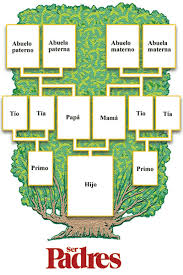 Arbol Genealogico Derecho Familia Pinterest Manualidades