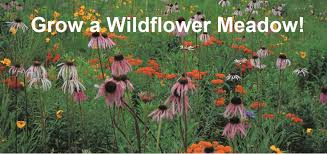 wildflower farm is your source for organically grown non gmo native north american wildflower seeds native grasses and wildflower seed mixes