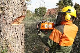 4 Things You Need to Know Before You Prune a Tree\u2014MONEY | Money