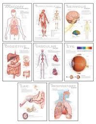 Wall Chart Of Human Anatomy 9781932922851 Human Anatomy Chart Pack Wall Chart