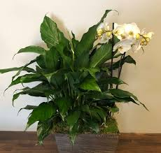 orchid peace lily basket