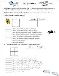 need an introductory genetics worksheet teaching biologyscience biologylife sciencescience lessons