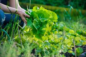 Image result for may vegetables